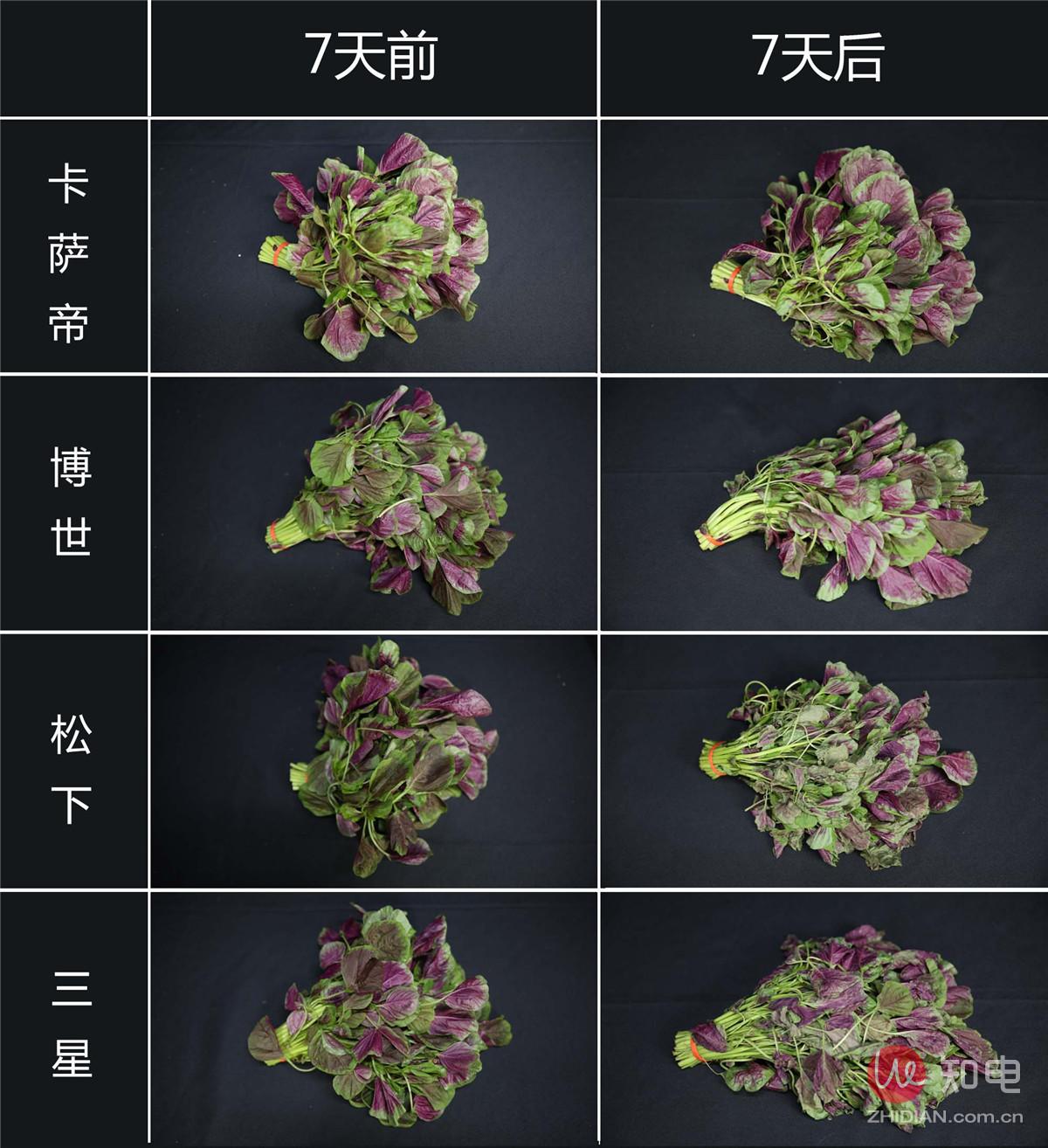 保鲜总-红苋菜 (2).jpg