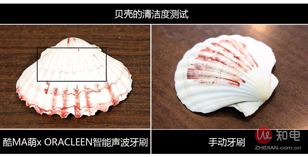 熊本贝壳清洁.jpg