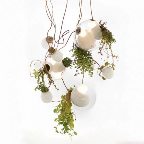 创意植物灯
