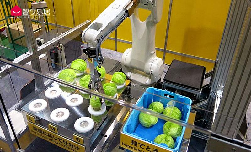 切蔬菜机器人